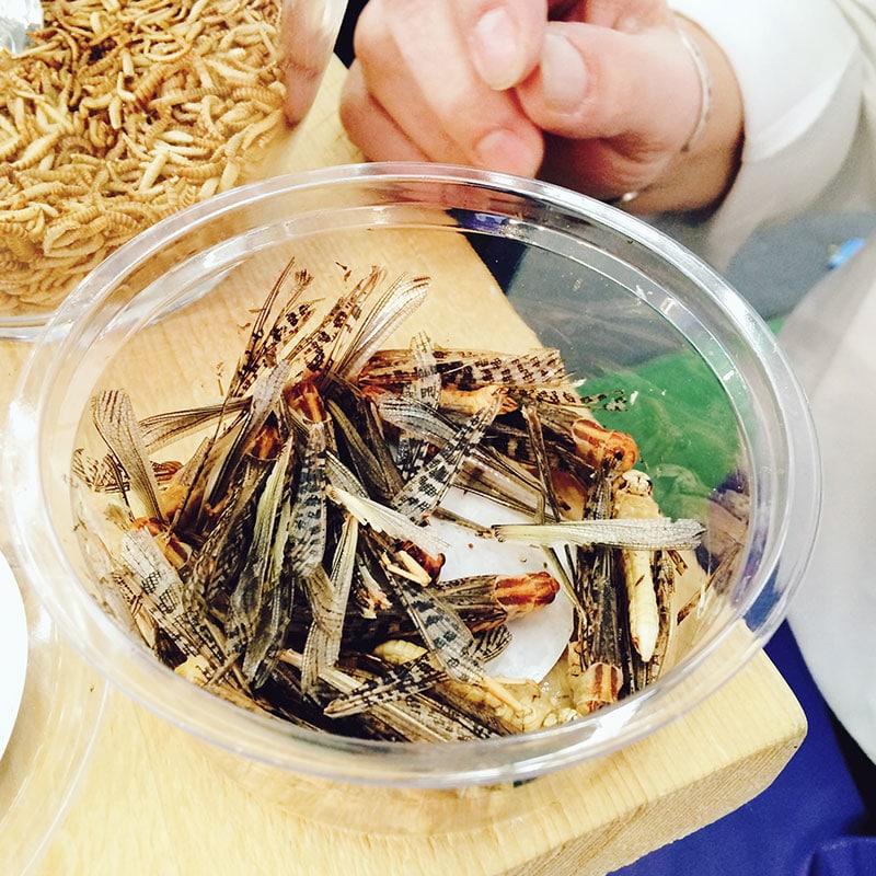 insekten eten, insekten, het eten van insekten, bucket list, bucket list insekten eten, sprinkhanen eten, meelwormen eten,