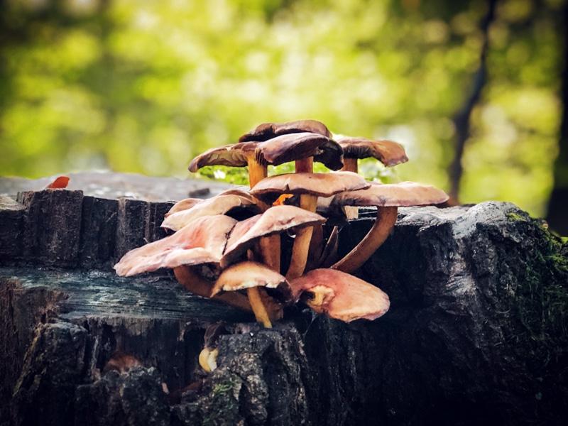 N70 wandelroute in de herfst