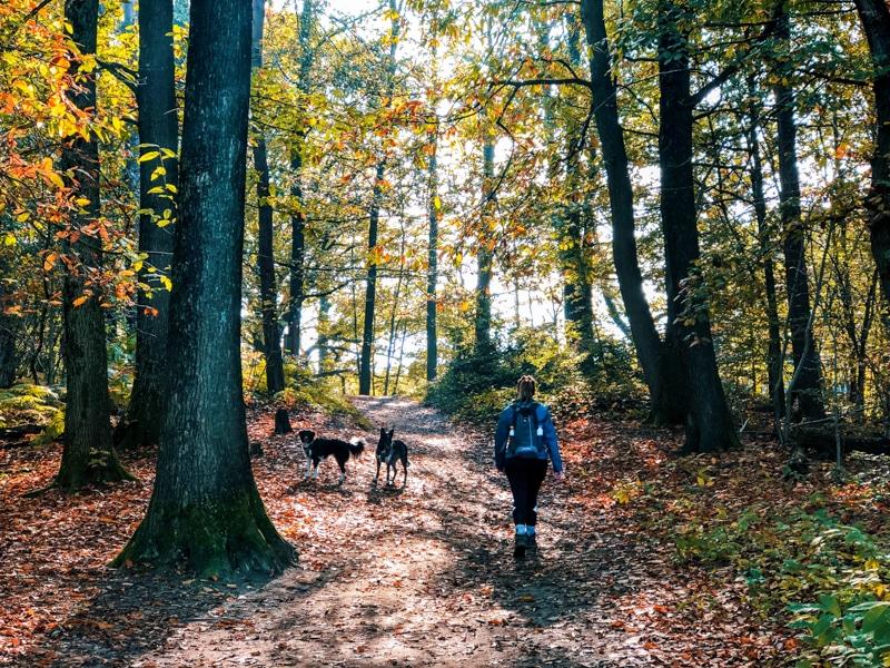 Wandelen met je hond in Berg en Dal