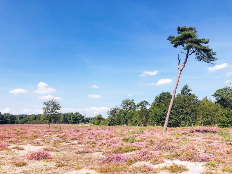 Heidewandelingen in Noord Brabant