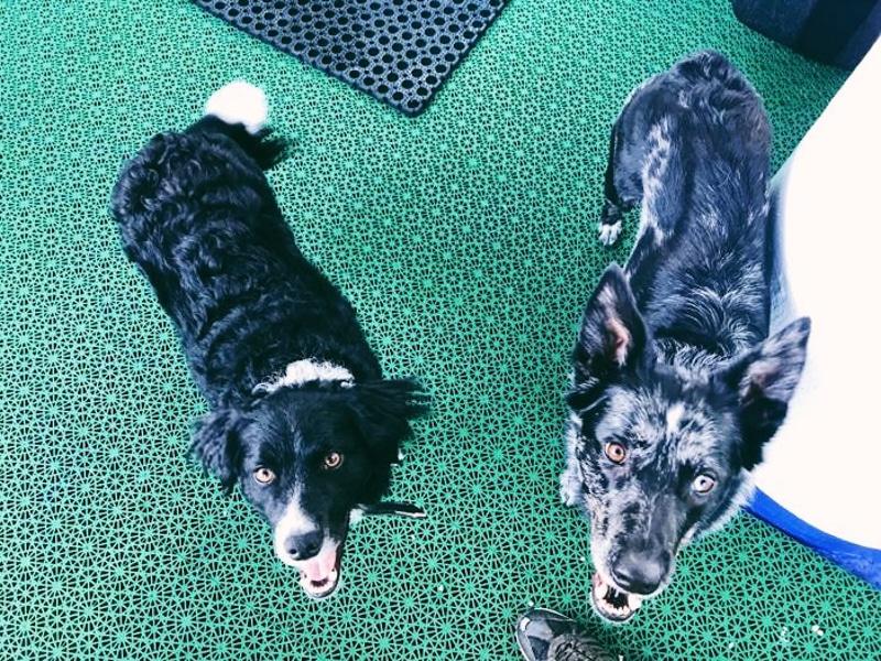 Met je hond op de ferry naar Schotland