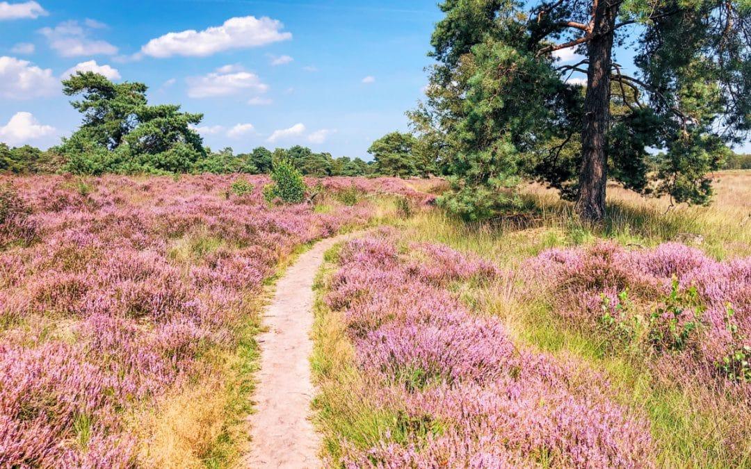 De mooiste heidewandelingen in Noord Brabant