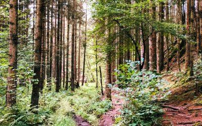 Wandelen in de Ardennen – de mooiste wandelroutes