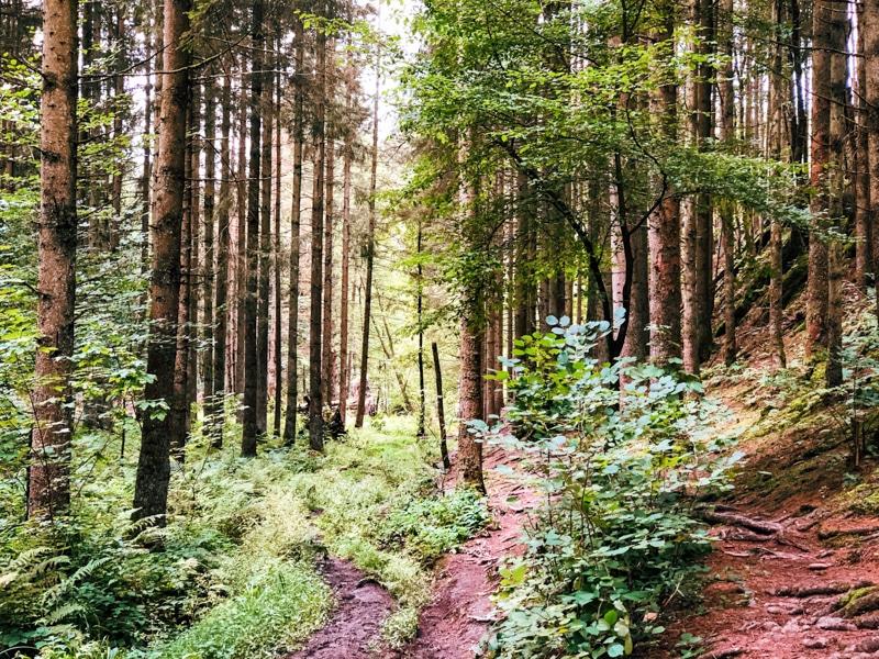 Wandel de prachtige Feeënvallei in de Ardennen
