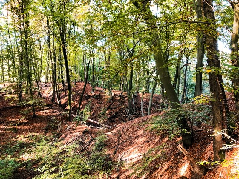 De N70 wandelroute: wandelen in Berg en Dal
