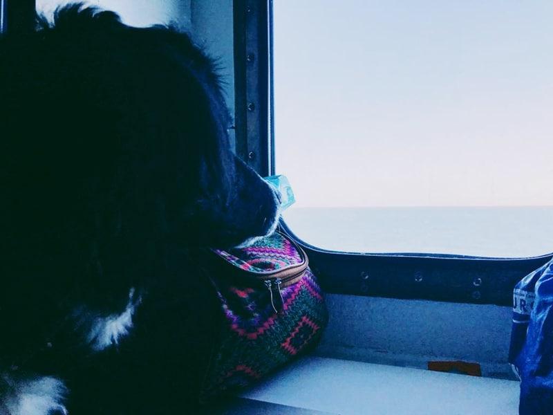 met je hond reizen naar Schotland