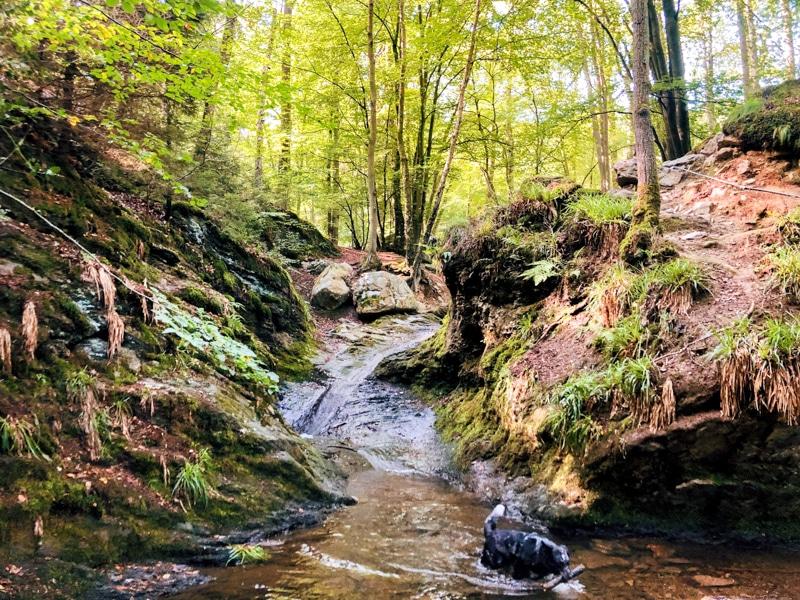 Ninglinspo wandeling Ardennen