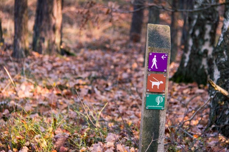 Cartierheide paarse wandelroute