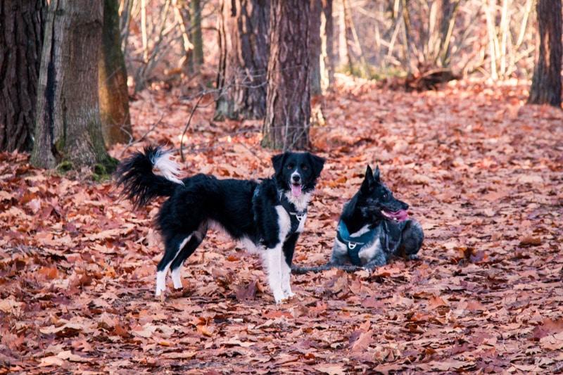 Wandeling Cartierheide in de Brabantse Kempen met honden