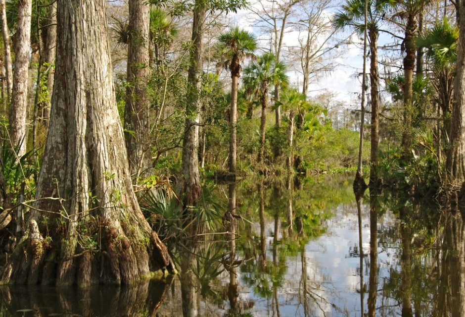 ABC wishlist, wishlist abc, Everglades National Park krokodil, Everglades National Park, national park, amerika,