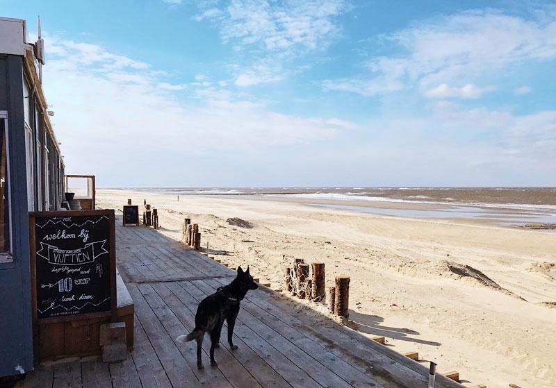 Texel met je hond, wandelen met je hond, op vakantie met je hond, reizen met je hond, honden en texel, texel en honden, op vakantie naar texel, wandelen met hond op texel, met je hond aangelijnd op texel, waar mag je hond vrij rondlopen op texel,