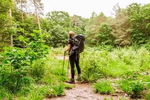 Wandelen in het Mastbos Breda, wandelen met bepakking, wandelen in omgeving breda,