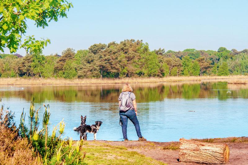 Grenspark de Zoom Kalmthoutse Heide, kalmthoutse heide, wandelen belgie, wandelen kalmthoutse heide, wandeling kalmthoutse heide, wandelen met je hond kalmthoutse heide, honden kalmthoutse heide,