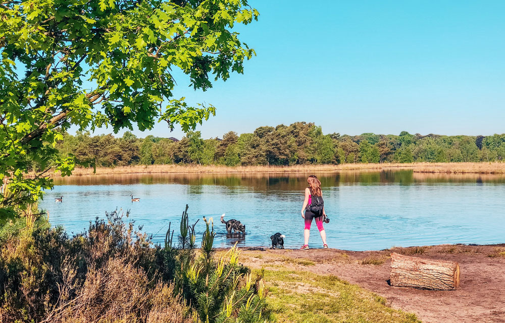 Wandelen in de Kalmthoutse Heide – Grenspark de Zoom met honden