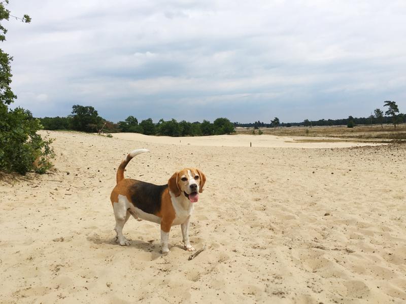 Backtstage juli, drunese duinen, dagje weg, samen weg, verliefd, honden, wandelen met honden, wandelen met je hond,