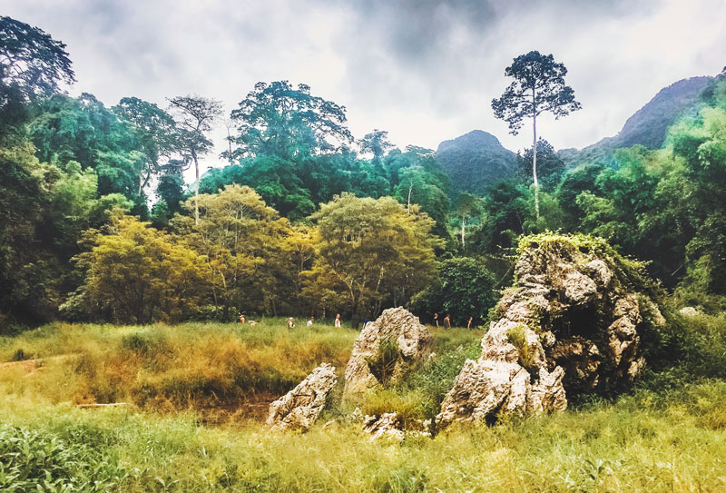 Jungle Tour Khao Sok National Park