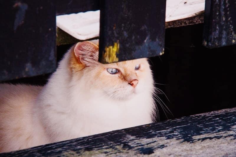 Veel katten op Marken
