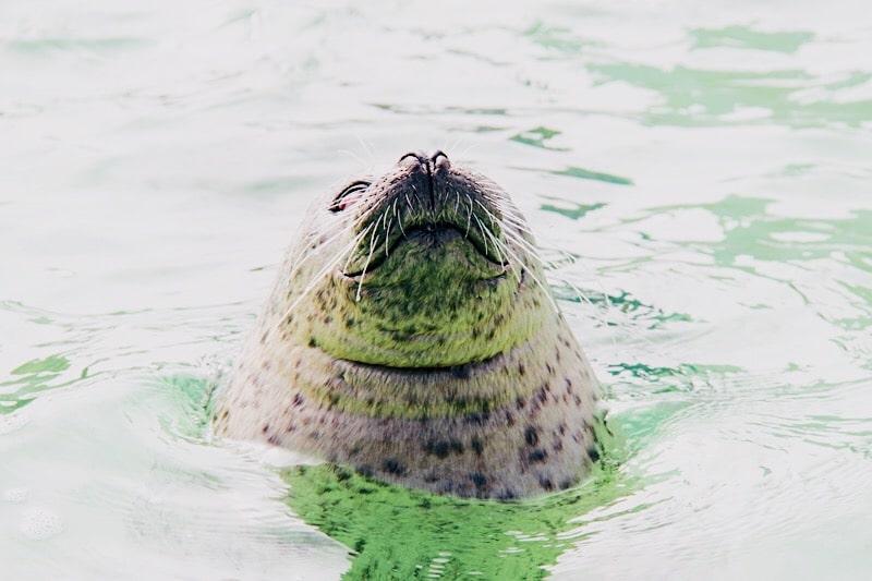 zeehonden ecomare, Ecomare Texel, ecomare zeehonden en bruinvissen, zeehondenopvang, zeehondenopvang texel, ecomare bezoeken, bezoeken ecomare,