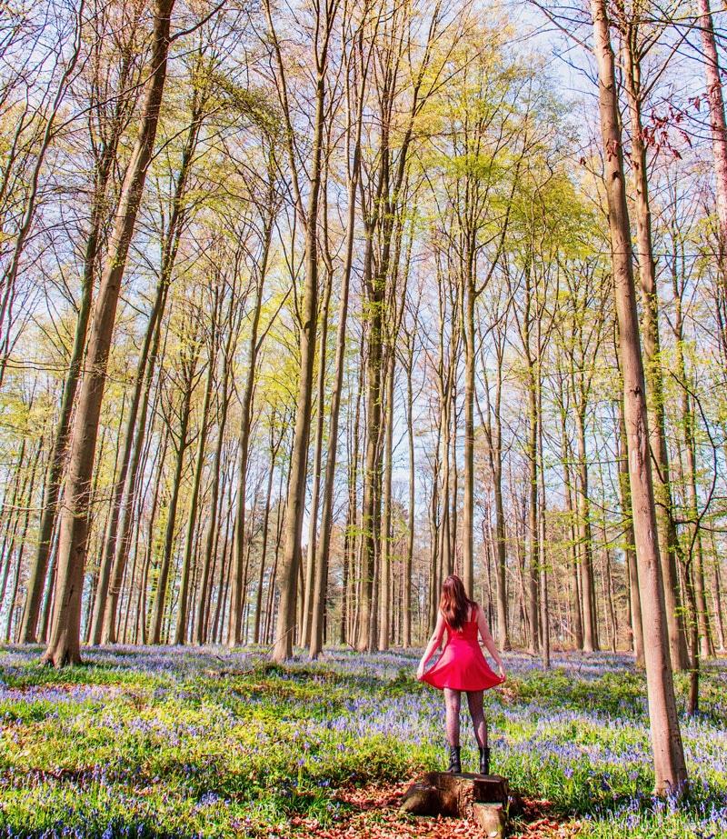 Hallerbos België wandeling
