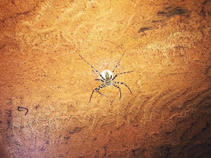 Spinnen zo groot als je hand