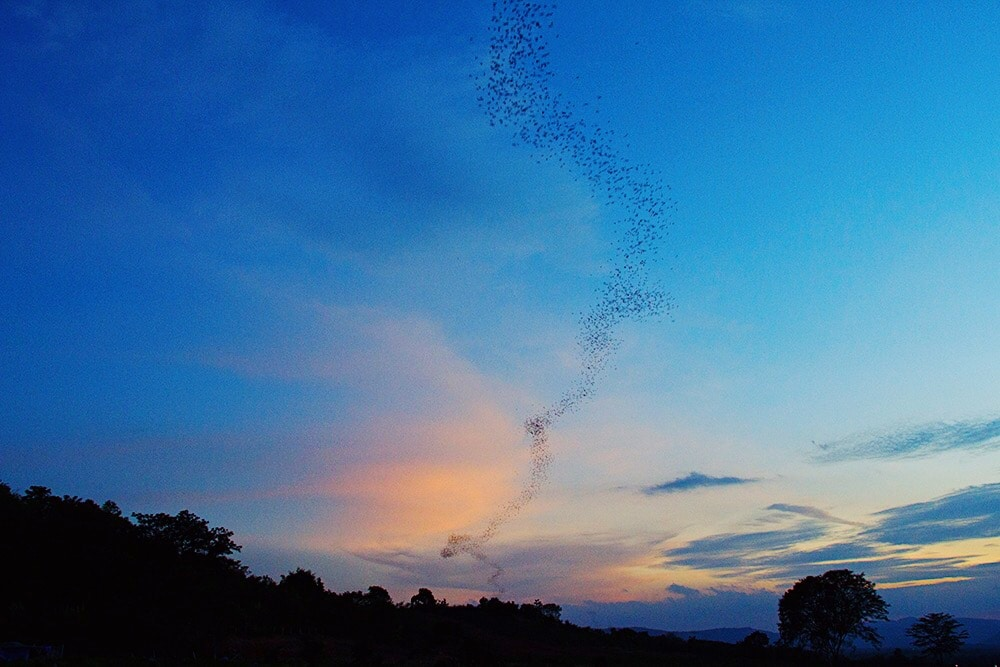 Miljoenen vleermuizen spotten in Khao Yai National Park