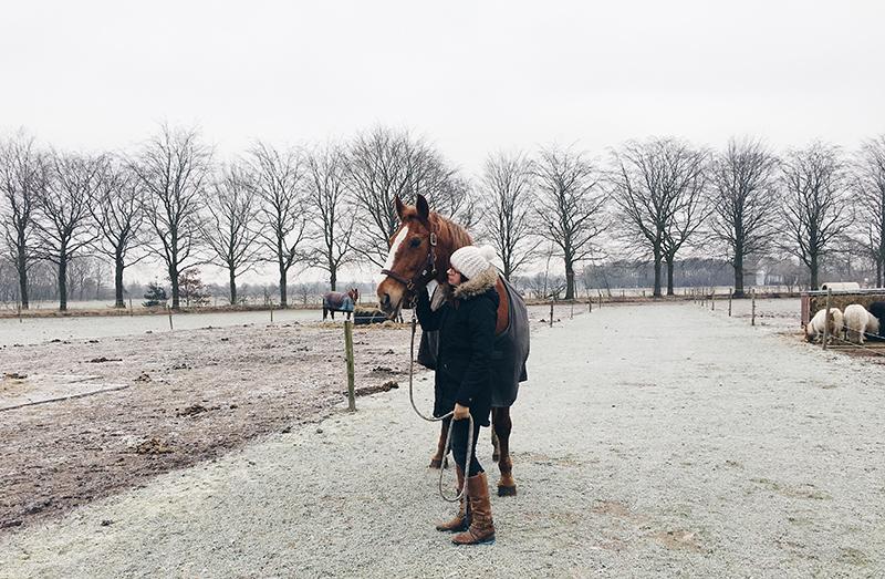 kasja, mijn paard, paard, backstage januari