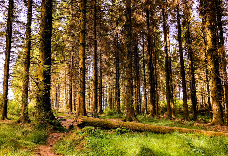 Het lopen van de West Highland Way