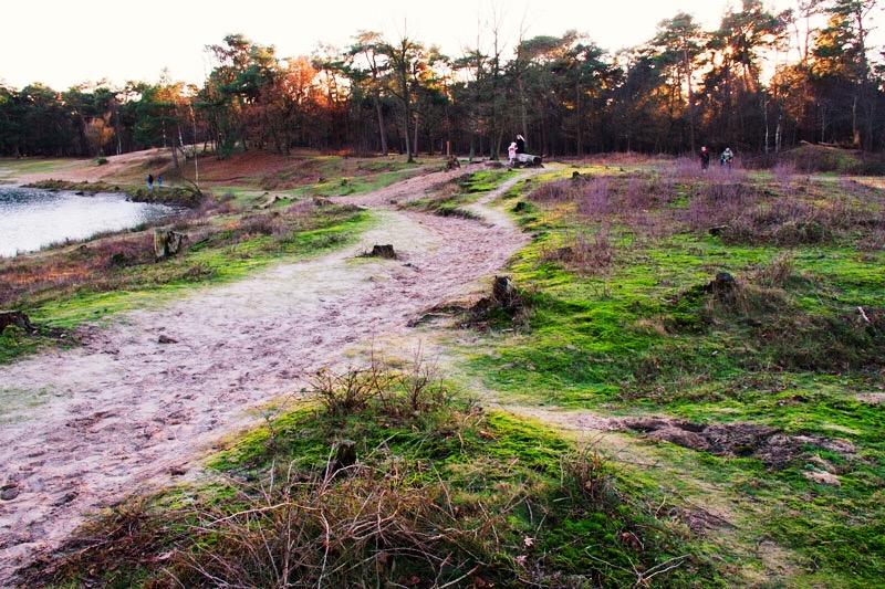 schotse hooglanders, Leemputten Dorst, wandelen dorst, dorst, wandelen, wandelen Nederland, wandelen noord brabant, noord brabant, surea, surea dorst, boswandeling nederland, boswandelingen noord brabant,