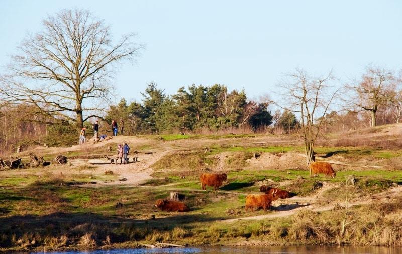 Wandelen in het natuurgebied de Leemputten van Dorst