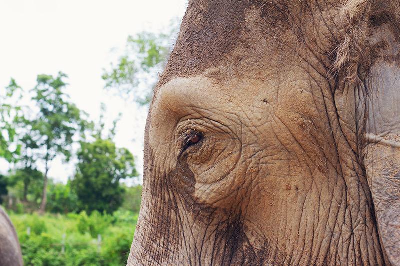 Elephant Retirement Park, olifanten park, olifanten opvang, chiang mai, thailand,