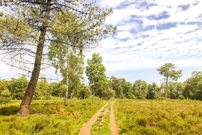 Wandeling over de smokkelroute in Strijbeek, smokkelroute, smokkelroute strijbeek, wandelen in brabant, wandeling brabant, smokkelroute brabant, smokkelroute strijbeekse heide,