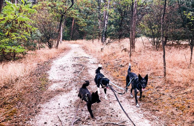 Wandelen bij de Oisterwijkse Vennen met je hond