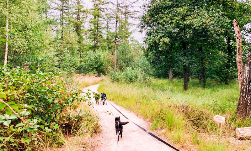 Met je hond wandelen bij de Oisterwijkse Vennen