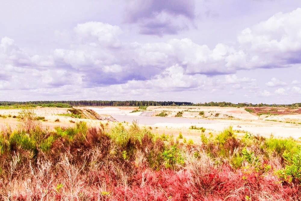 Wandelen in Nationaal Park Hoge Kempen – Mechelse Heide