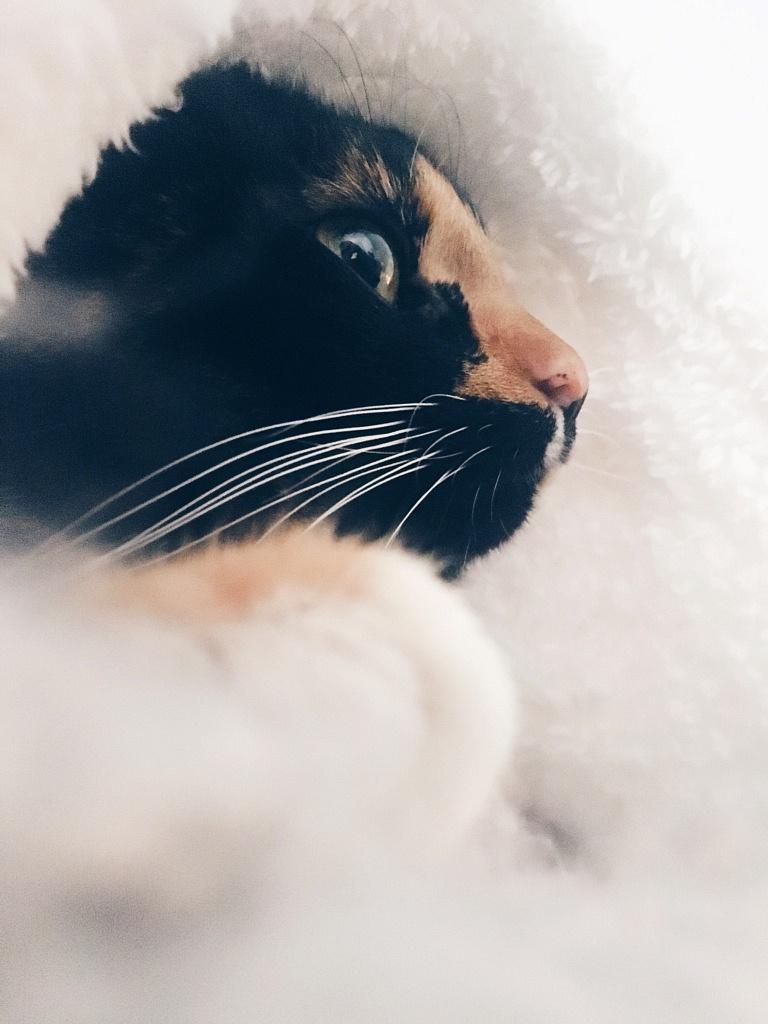 kat, poes, katten, poezen,