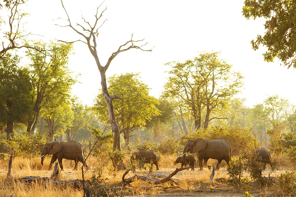 South Luangwa national park | Afrika's best bewaarde geheim