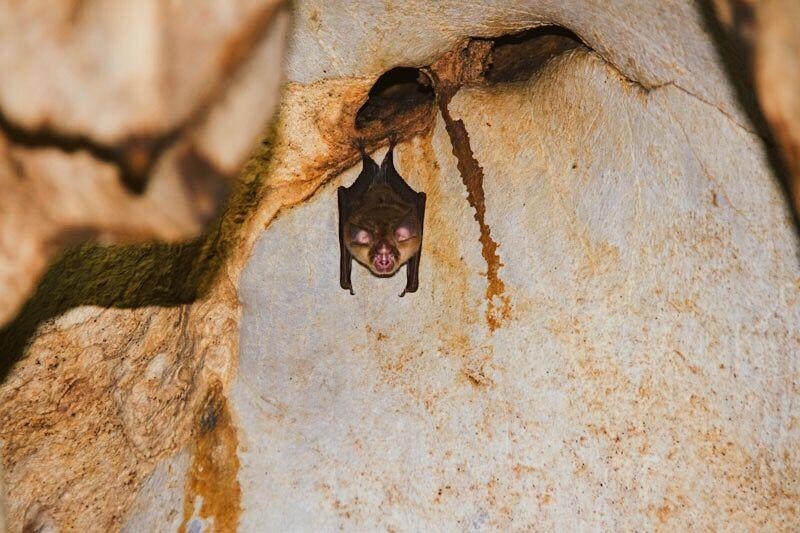 Vleermuizen spotten in de grot