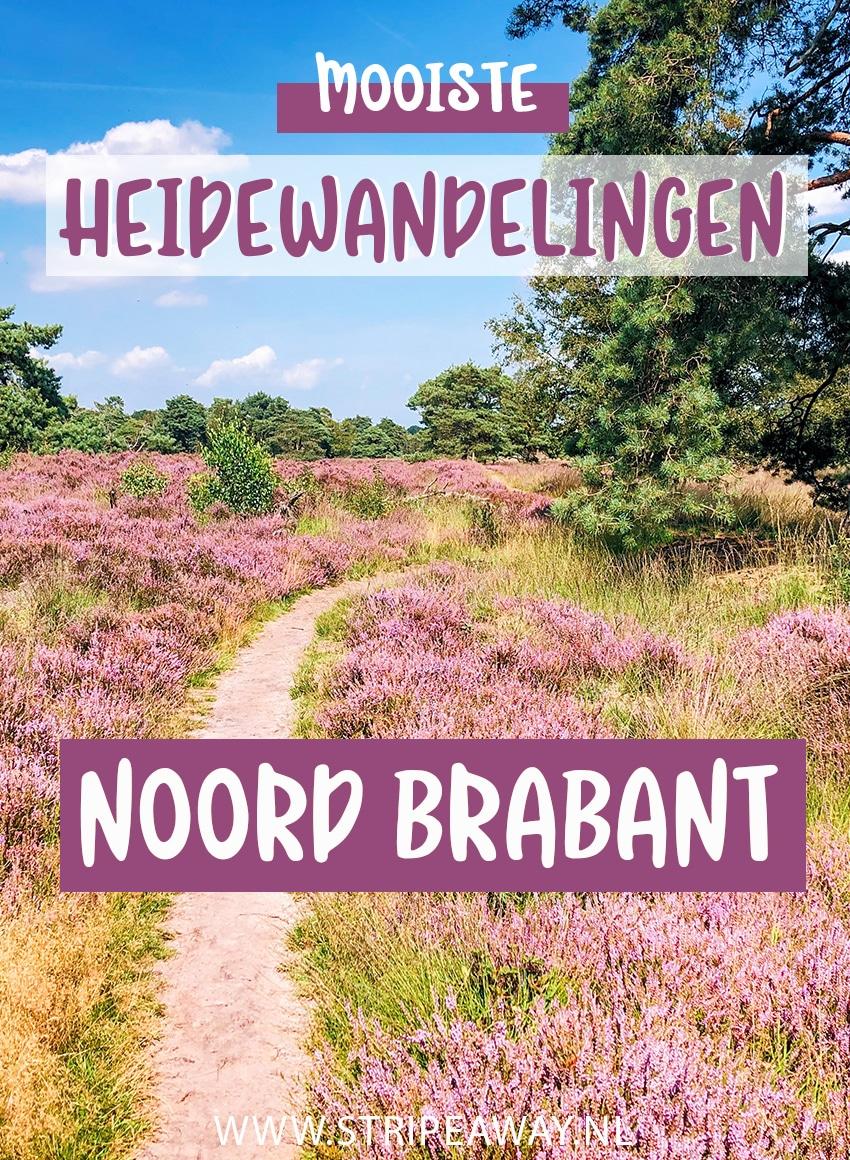 Heidewandelingen Noord Brabant