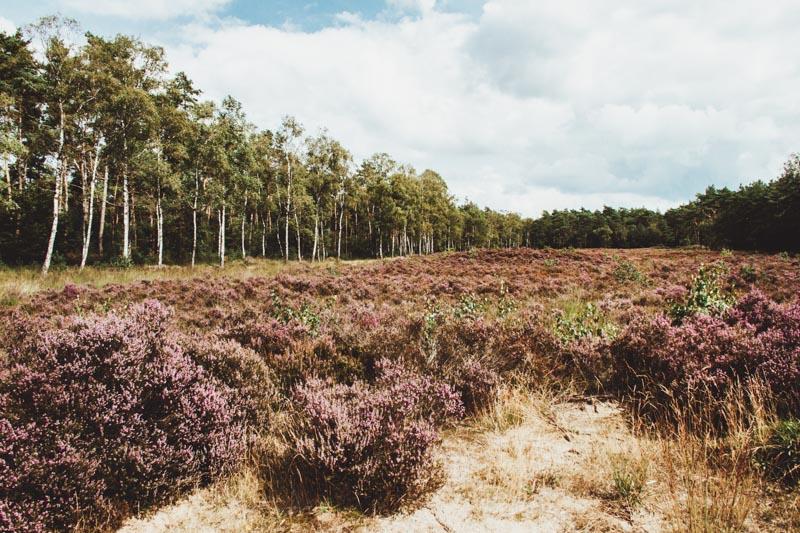 Heidewandelingen in Utrecht