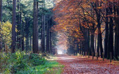 Wandel de Historische route door het Mastbos in Breda