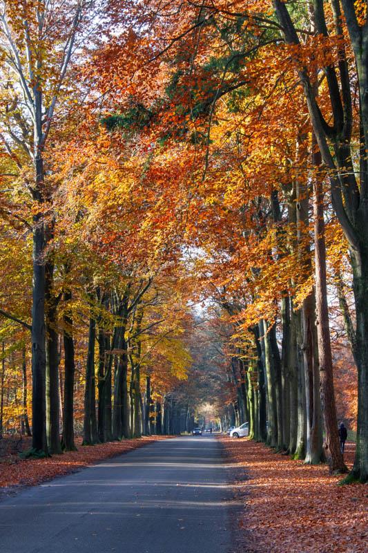 Historische wandelroute Mastbos Breda
