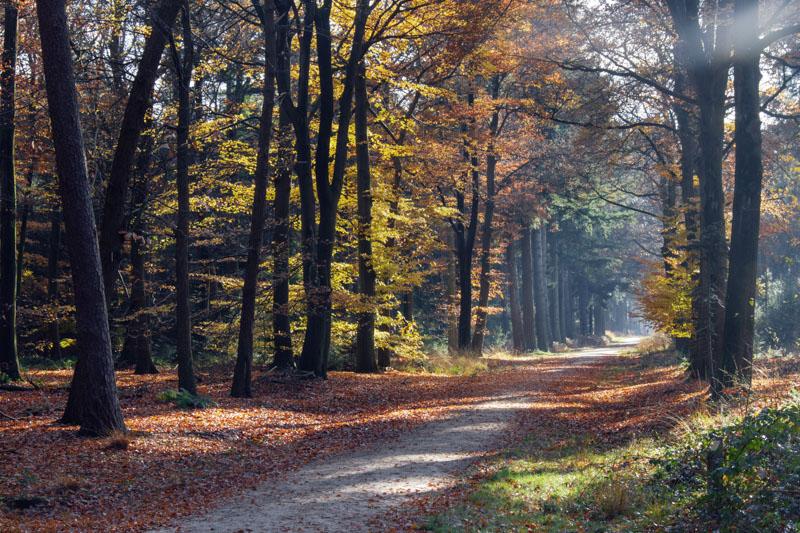 Wandelen Mastbos Historische route