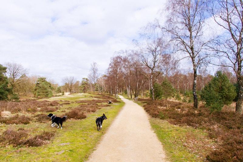 Huisvennenroute Kampina met honden