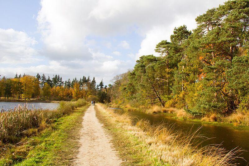 Wandel de natuurbelevingsroute in Mastbos Breda