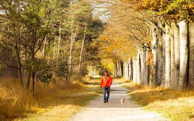 De mooiste herfstwandelingen in Nederland