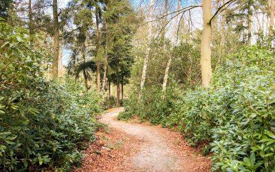 Kikkerpad wandelroute | wandelen op de Kalmthoutse heide