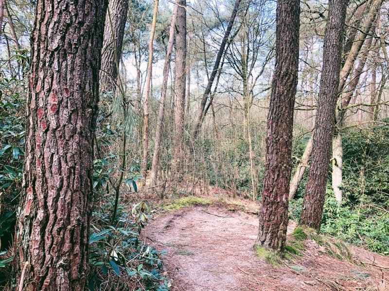 Wandelen over de Kalmthoutse Heide via het Kikkerpad