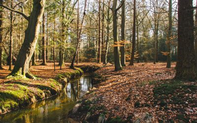 Wandelen op Landgoed Baest bij Oirschot