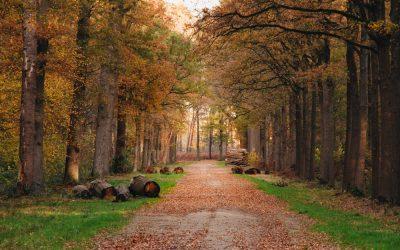 Wandelen in het Liesbos bij Breda