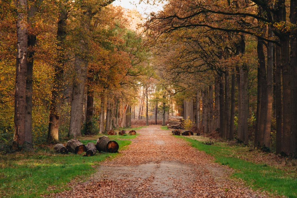 wandelen Liesbos